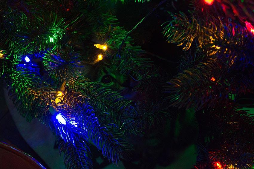 кот и новогодняя елка смешные фото 45