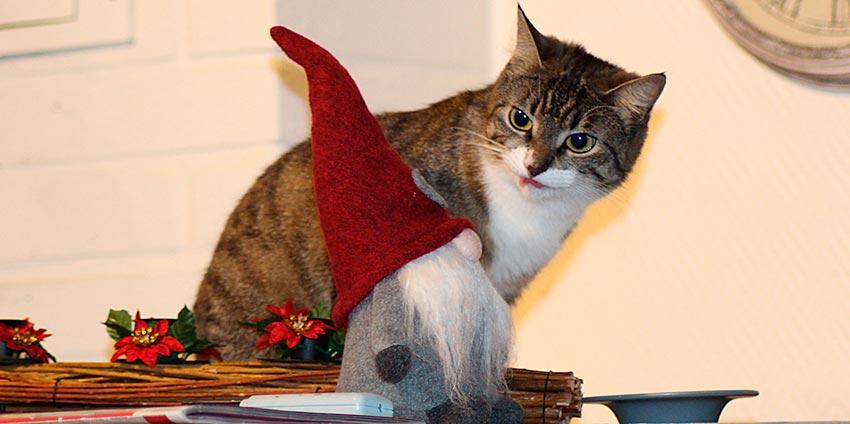кот и новогодняя елка смешные фото 46