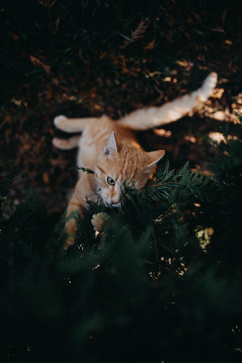 кот и новогодняя елка смешные фото 41