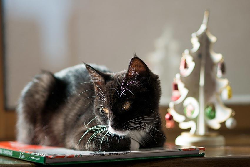 кот и новогодняя елка смешные фото 42