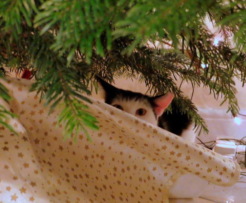 кот и новогодняя елка смешные фото 40