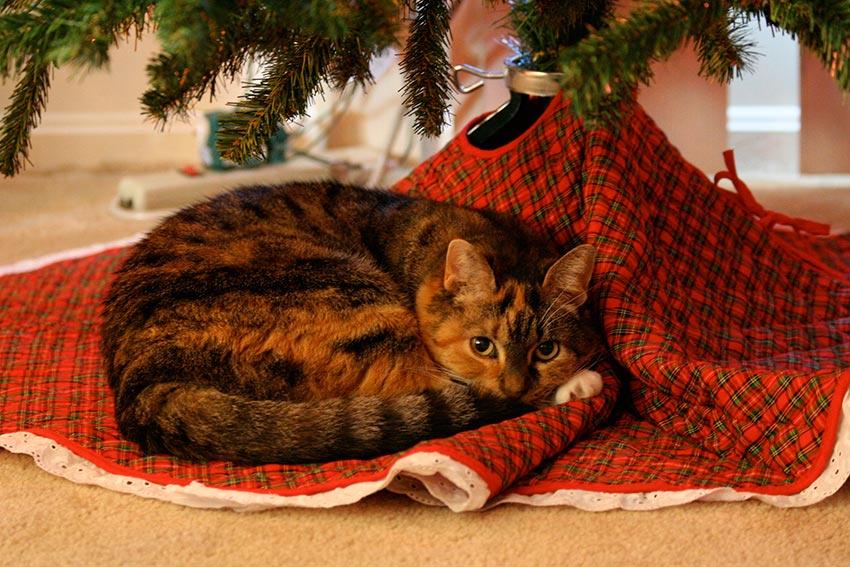 кот и новогодняя елка смешные фото 7