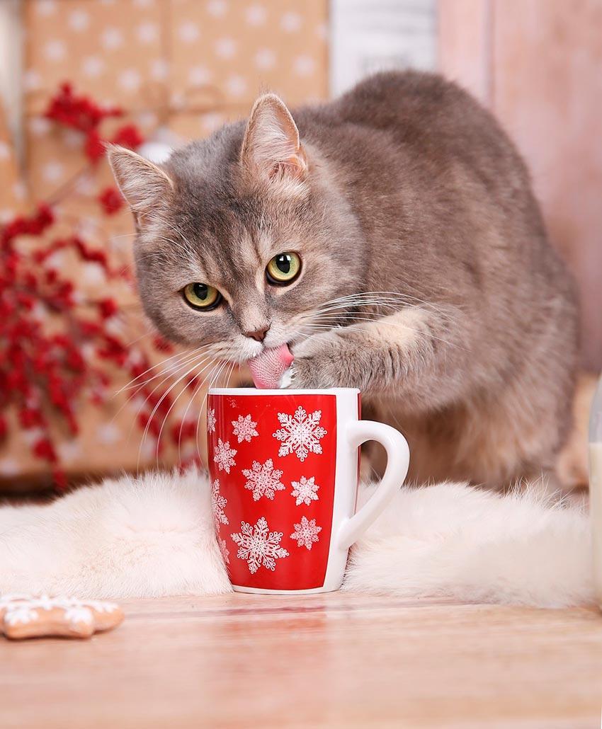кот и новогодняя елка смешные фото 59