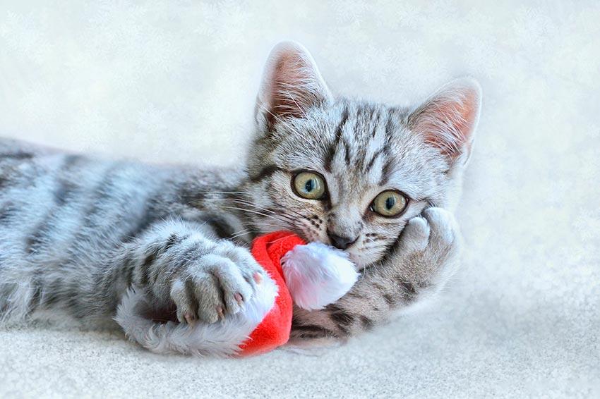 кот и новогодняя елка смешные фото 19