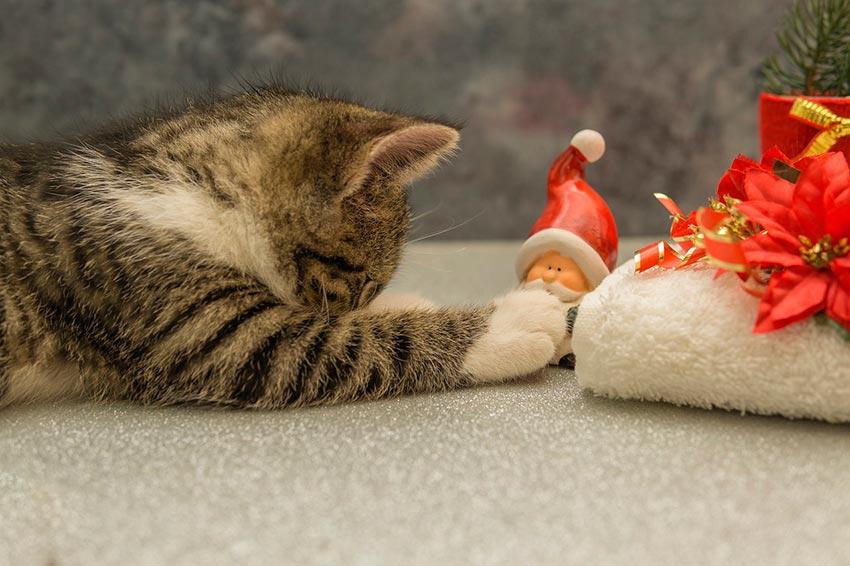 кот и новогодняя елка смешные фото 39