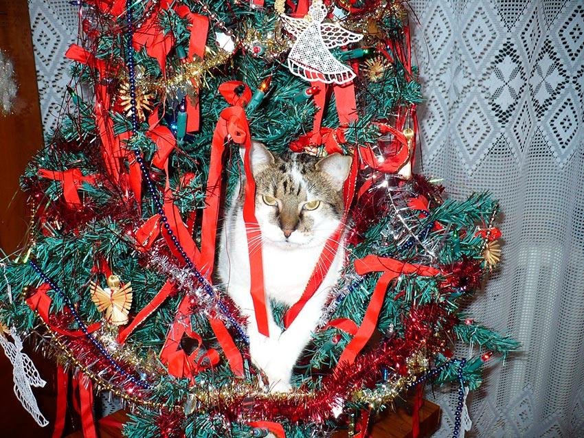 кот и новогодняя елка смешные фото 36