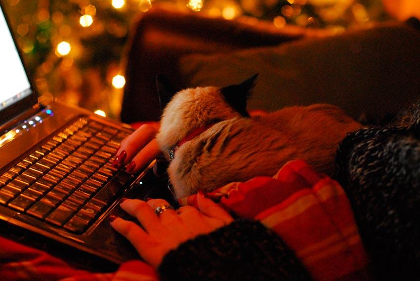 кот и новогодняя елка смешные фото 10