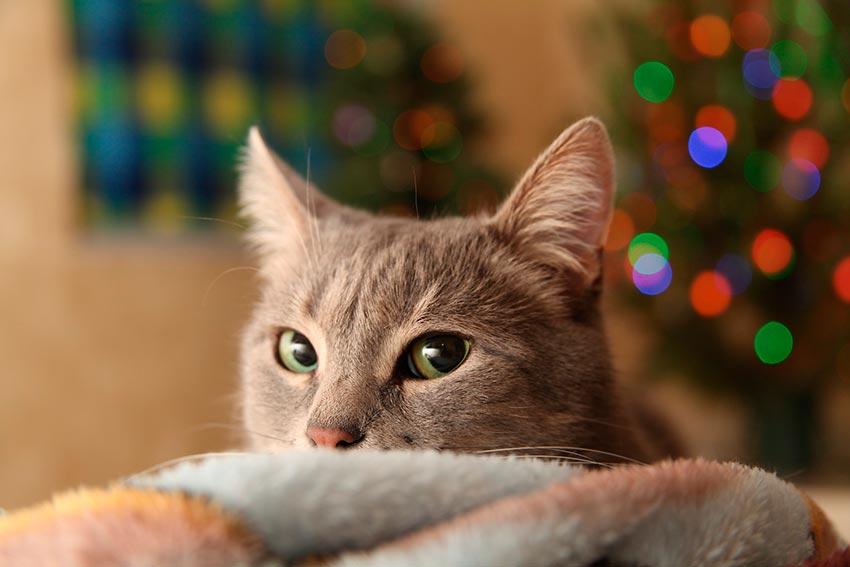 кот и новогодняя елка смешные фото 11
