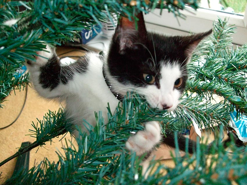 кот и новогодняя елка смешные фото 37
