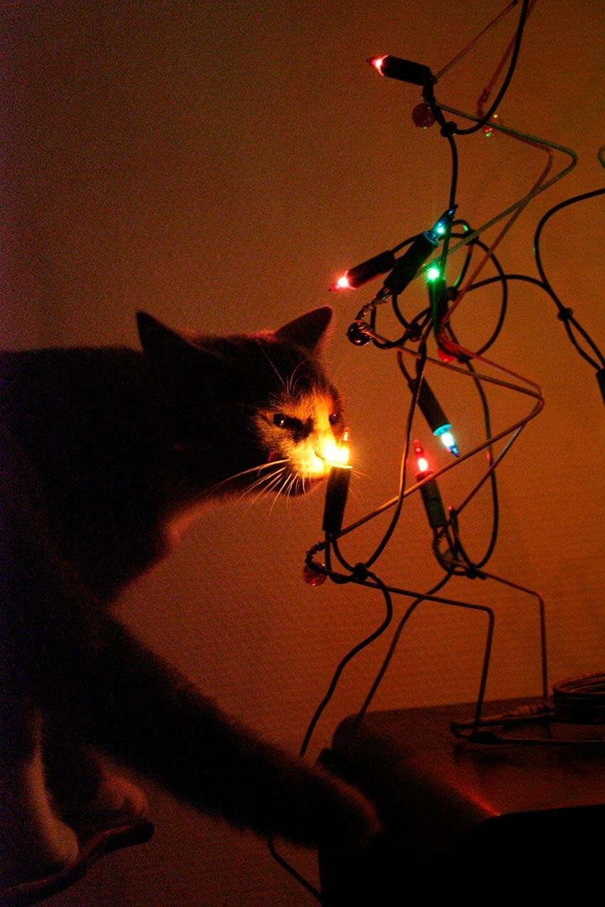 кот и новогодняя елка смешные фото 58