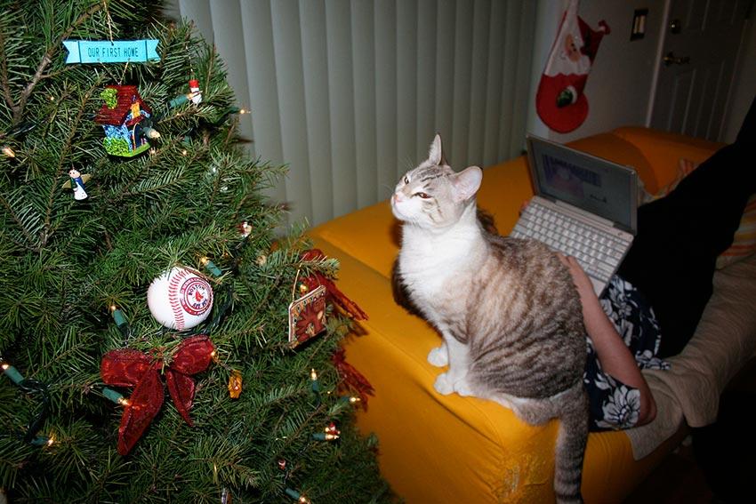 кот и новогодняя елка смешные фото 35