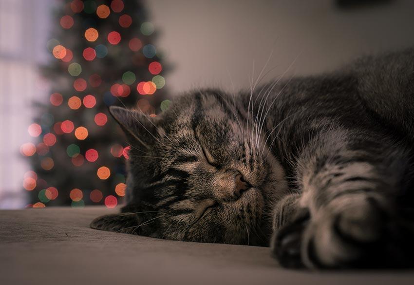кот и новогодняя елка смешные фото 8