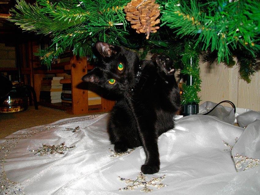 кот и новогодняя елка смешные фото 47