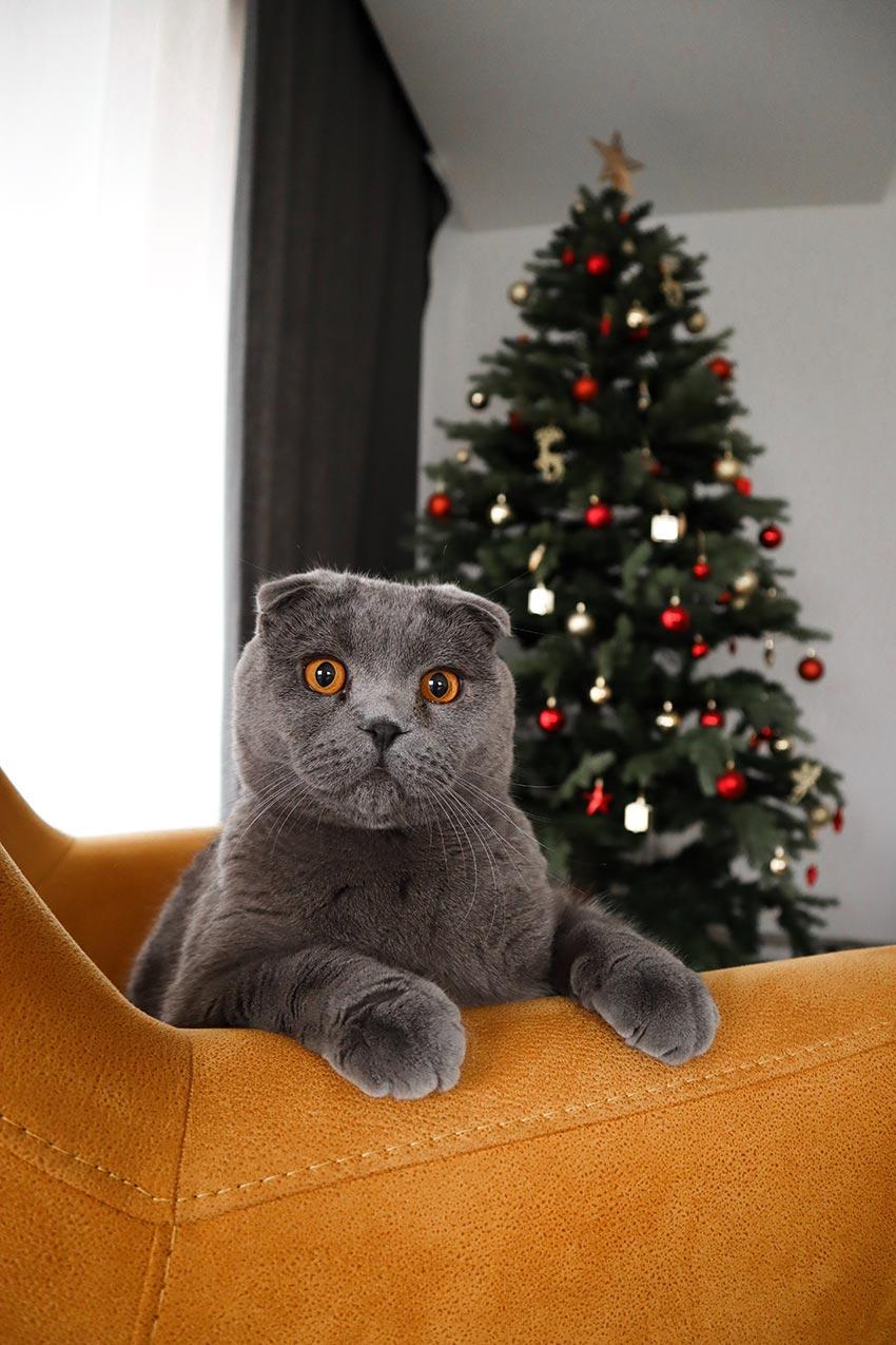 кот и новогодняя елка смешные фото 12