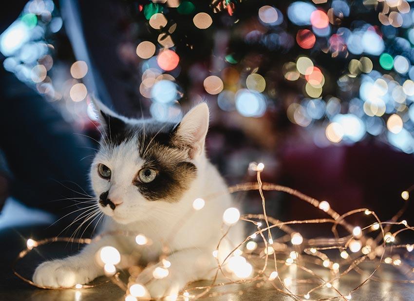 кот и новогодняя елка смешные фото 34