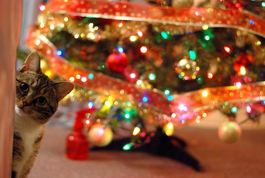 кот и новогодняя елка смешные фото 13