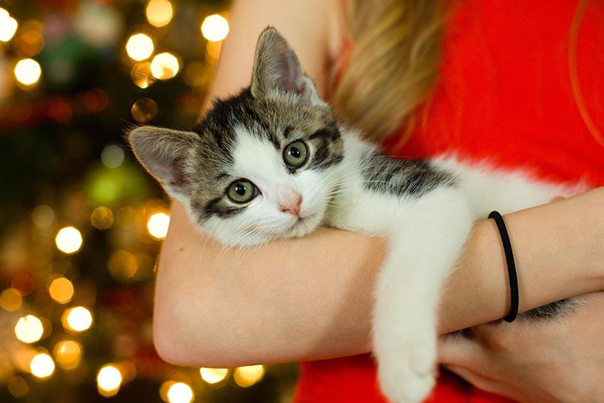 кот и новогодняя елка смешные фото 6