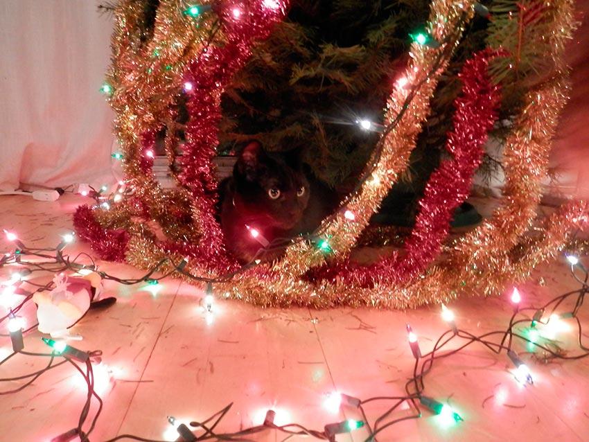 кот и новогодняя елка смешные фото 31