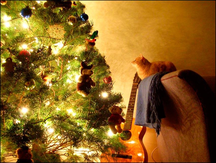 кот и новогодняя елка смешные фото 3