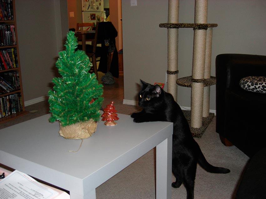 кот и новогодняя елка смешные фото 32