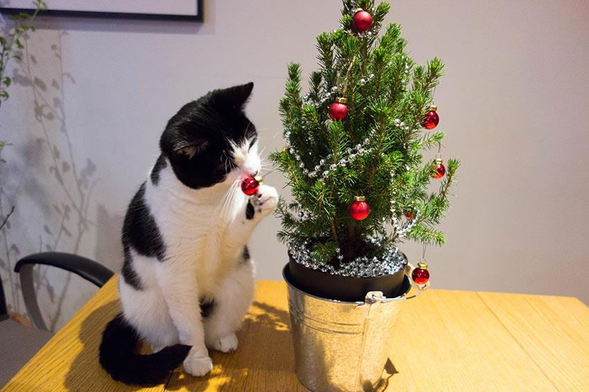 кот и новогодняя елка смешные фото 28