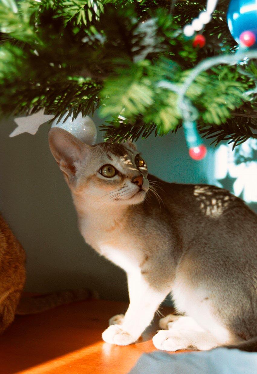 кот и новогодняя елка смешные фото 49