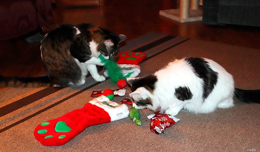 кот и новогодняя елка смешные фото 60