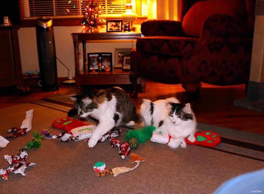 кот и новогодняя елка смешные фото 54