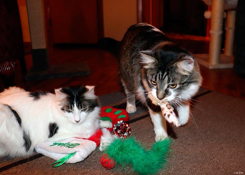 кот и новогодняя елка смешные фото 55