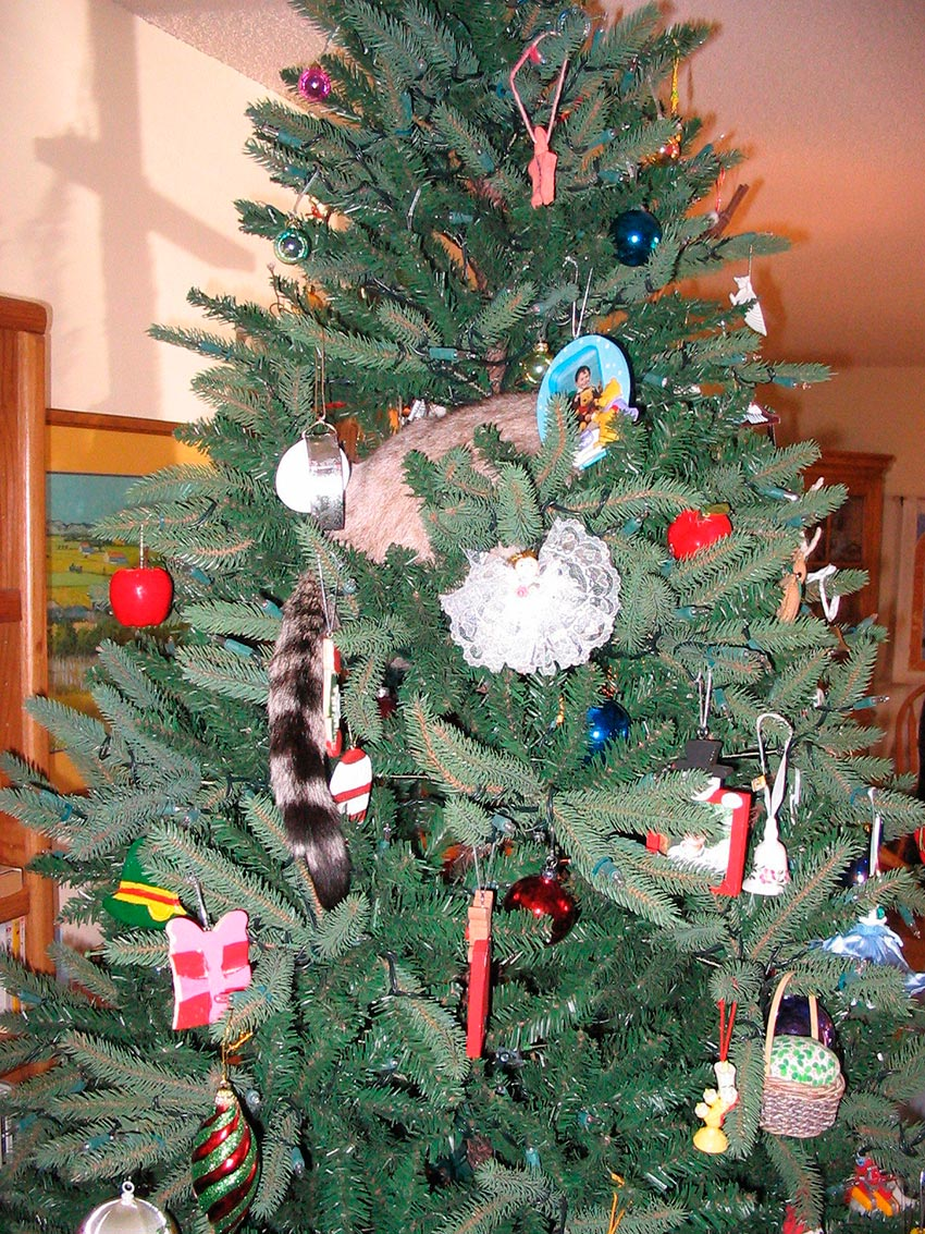 кот и новогодняя елка смешные фото 26