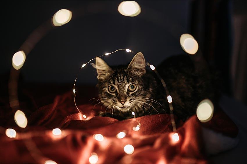 кот и новогодняя елка смешные фото 25