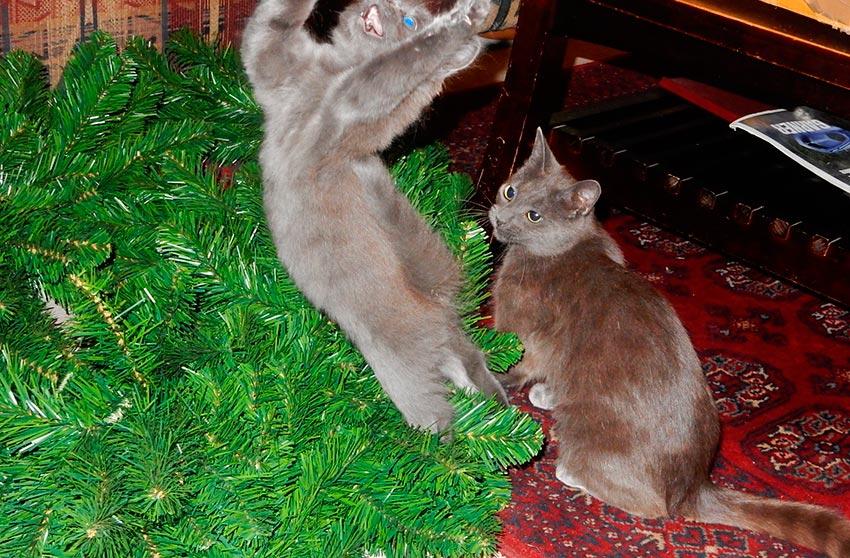 кот и новогодняя елка смешные фото 57