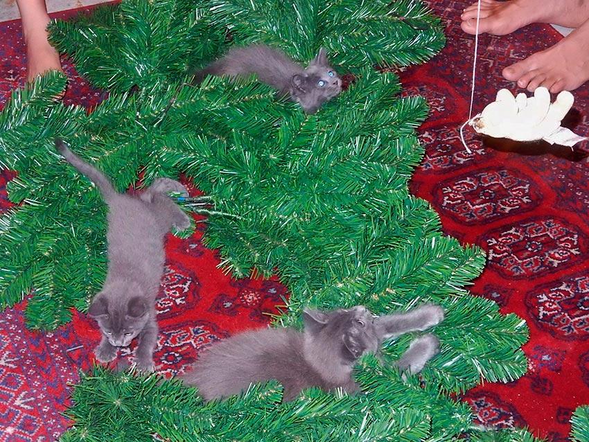 кот и новогодняя елка смешные фото 56