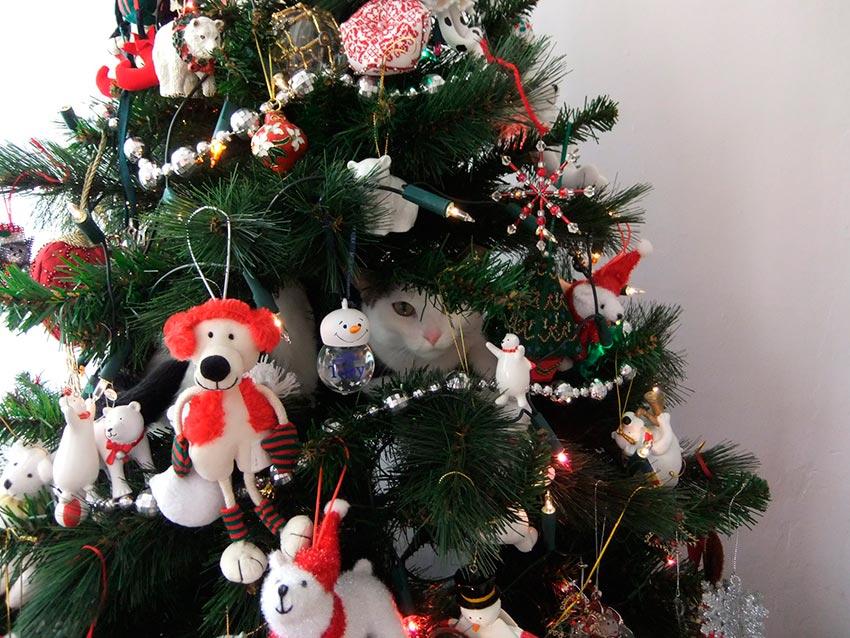 кот и новогодняя елка смешные фото 14