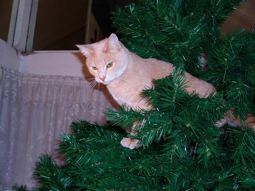 кот и новогодняя елка смешные фото 52