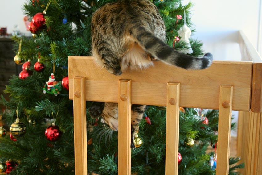 кот и новогодняя елка смешные фото 17
