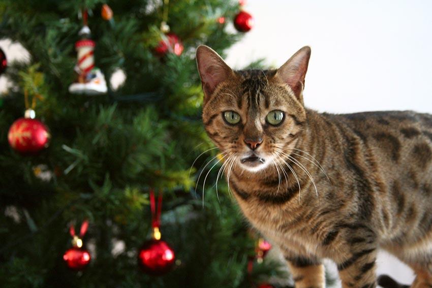 кот и новогодняя елка смешные фото 16