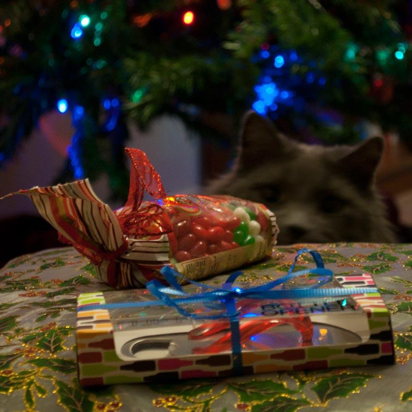 кот и новогодняя елка смешные фото 27
