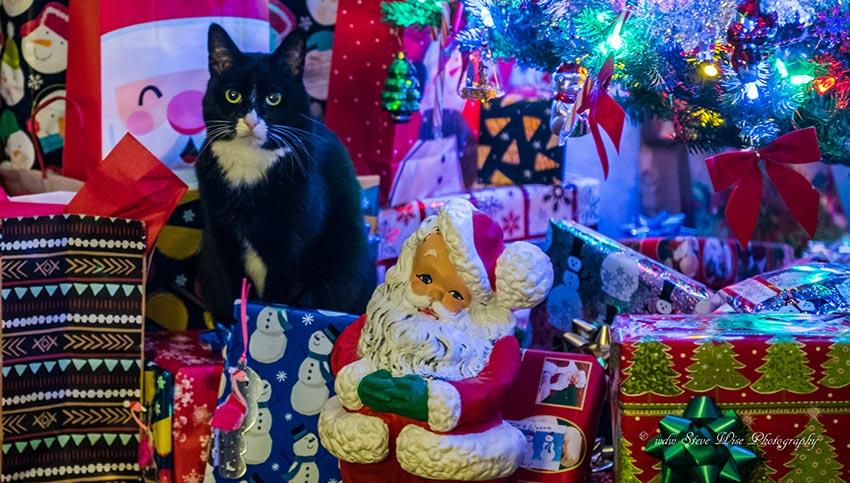 кот и новогодняя елка смешные фото 18