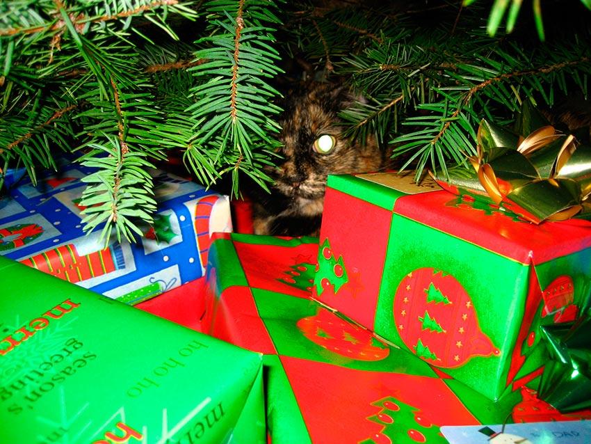 кот и новогодняя елка смешные фото 20