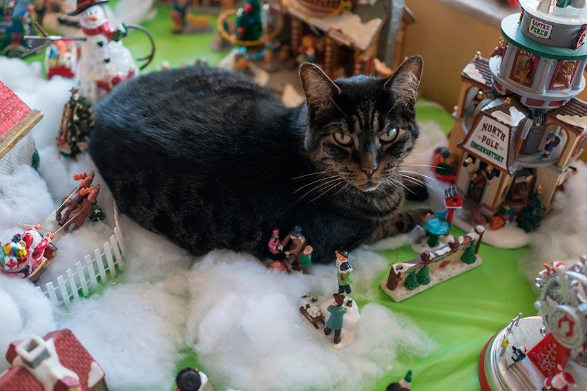 кот и новогодняя елка смешные фото 24