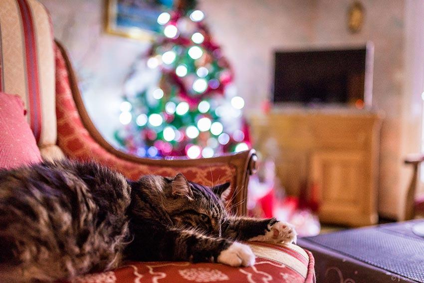 кот и новогодняя елка смешные фото 5