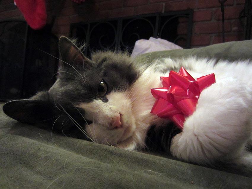 кот и новогодняя елка смешные фото 23