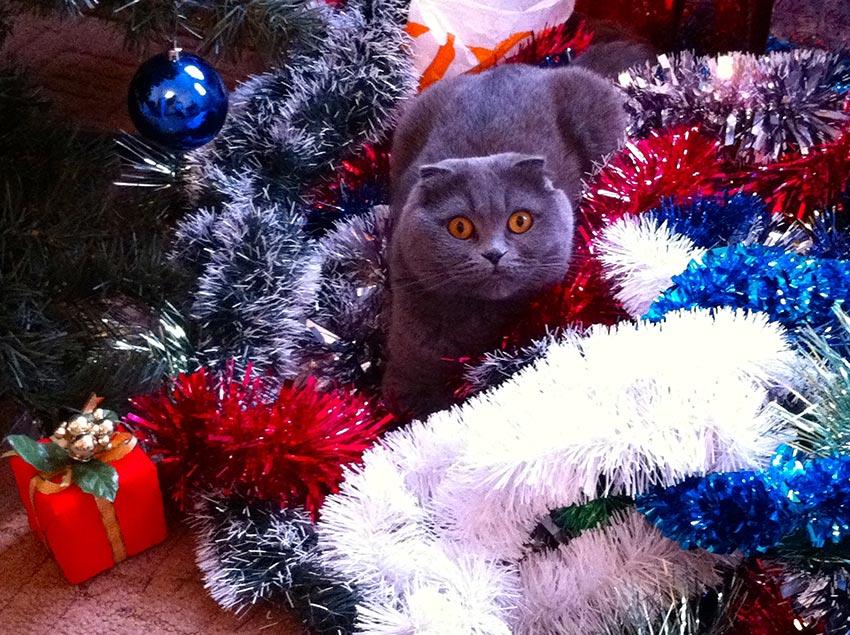 кот и новогодняя елка смешные фото 22