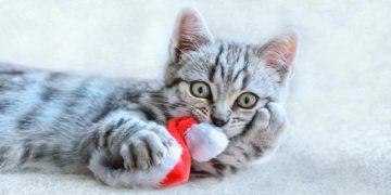 кот и новогодняя елка смешные фото
