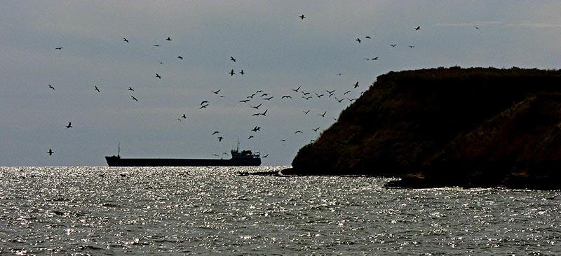 остров борисфен березань фото видео 1