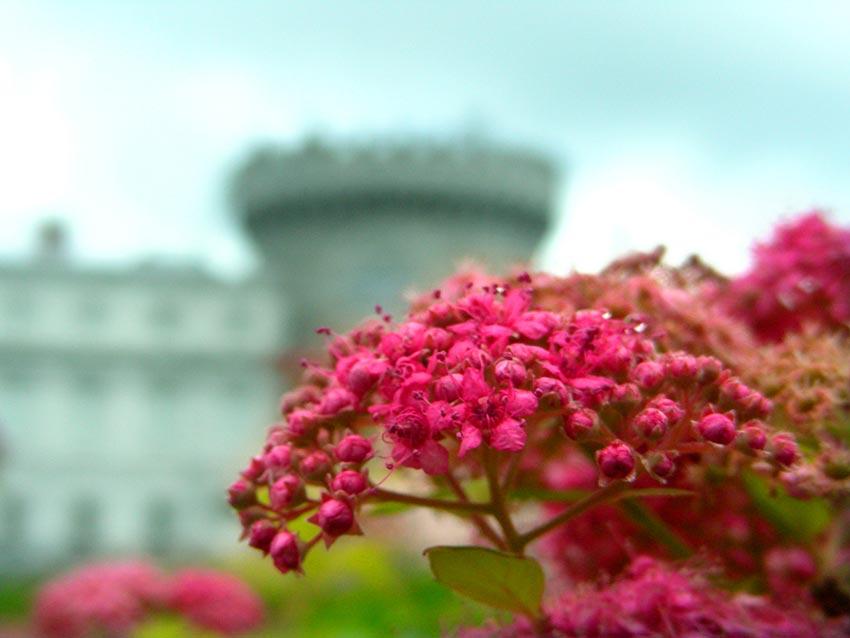 Дублинский замок Ирландия 21